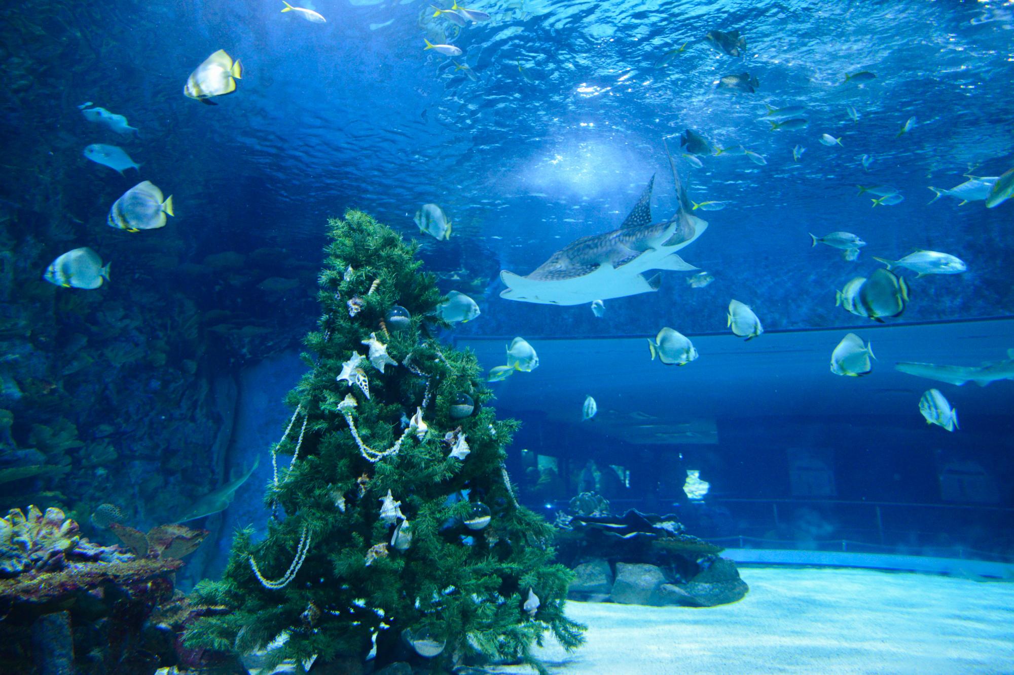 akvarij-12