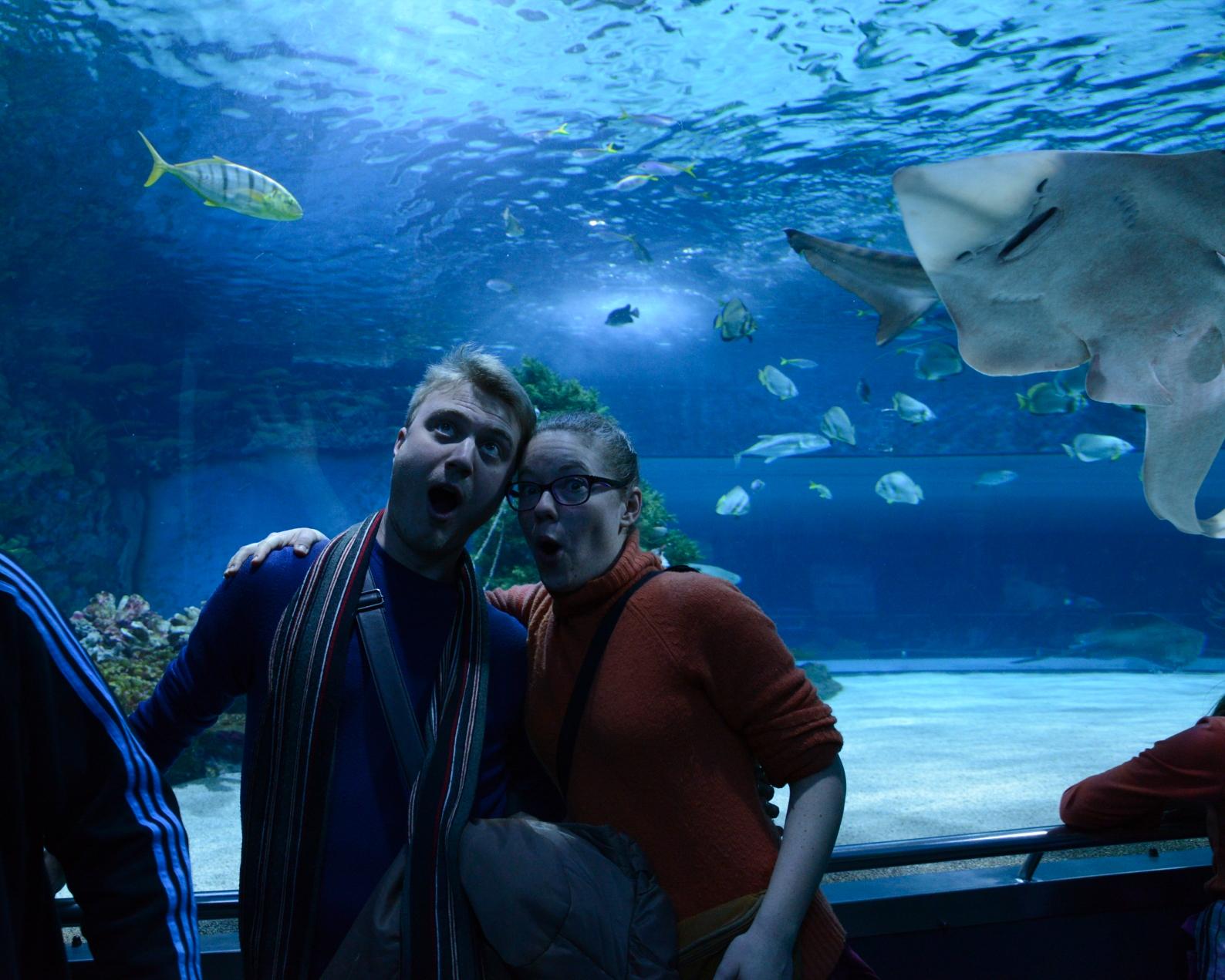 akvarij-5