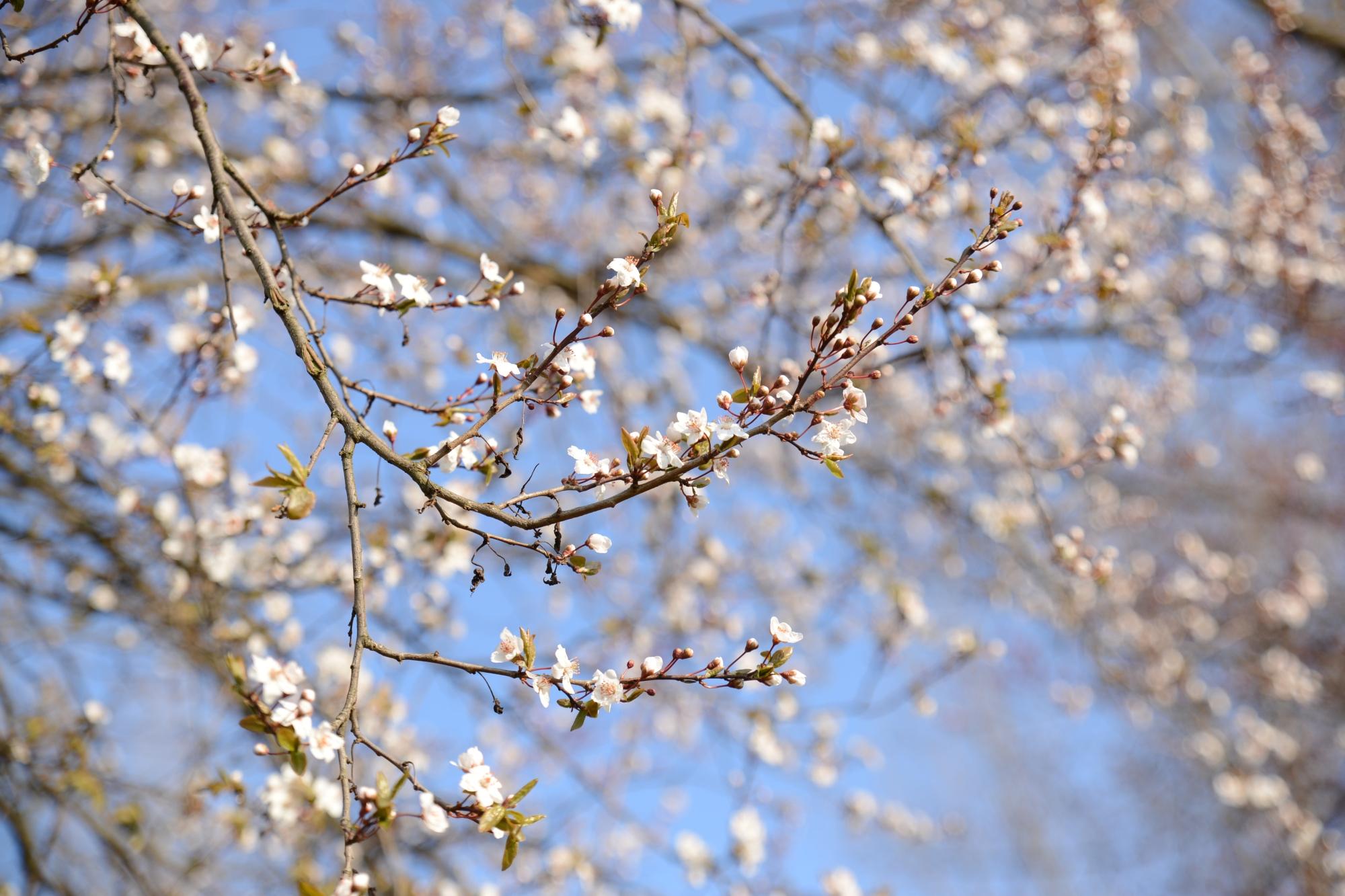 pomladni izlet_043