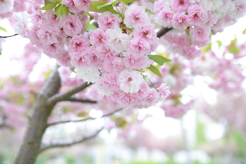 pomlad_001